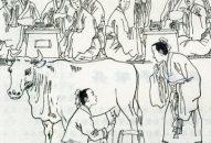 Chuyện 2 – Chứa sữa trong bụng bò